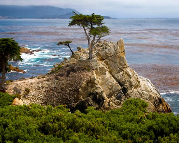 Monterey Lone Cypress near Pebble Beach California